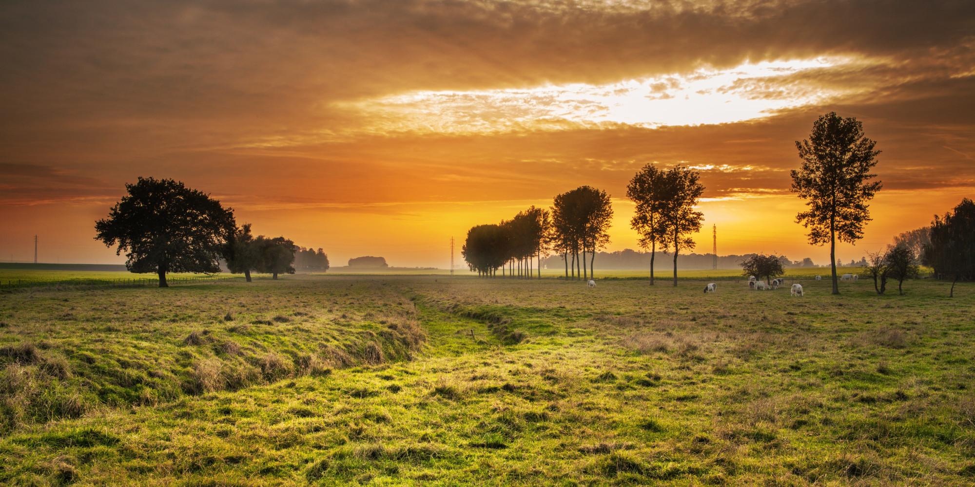 agrarisch gebied (TSOP)